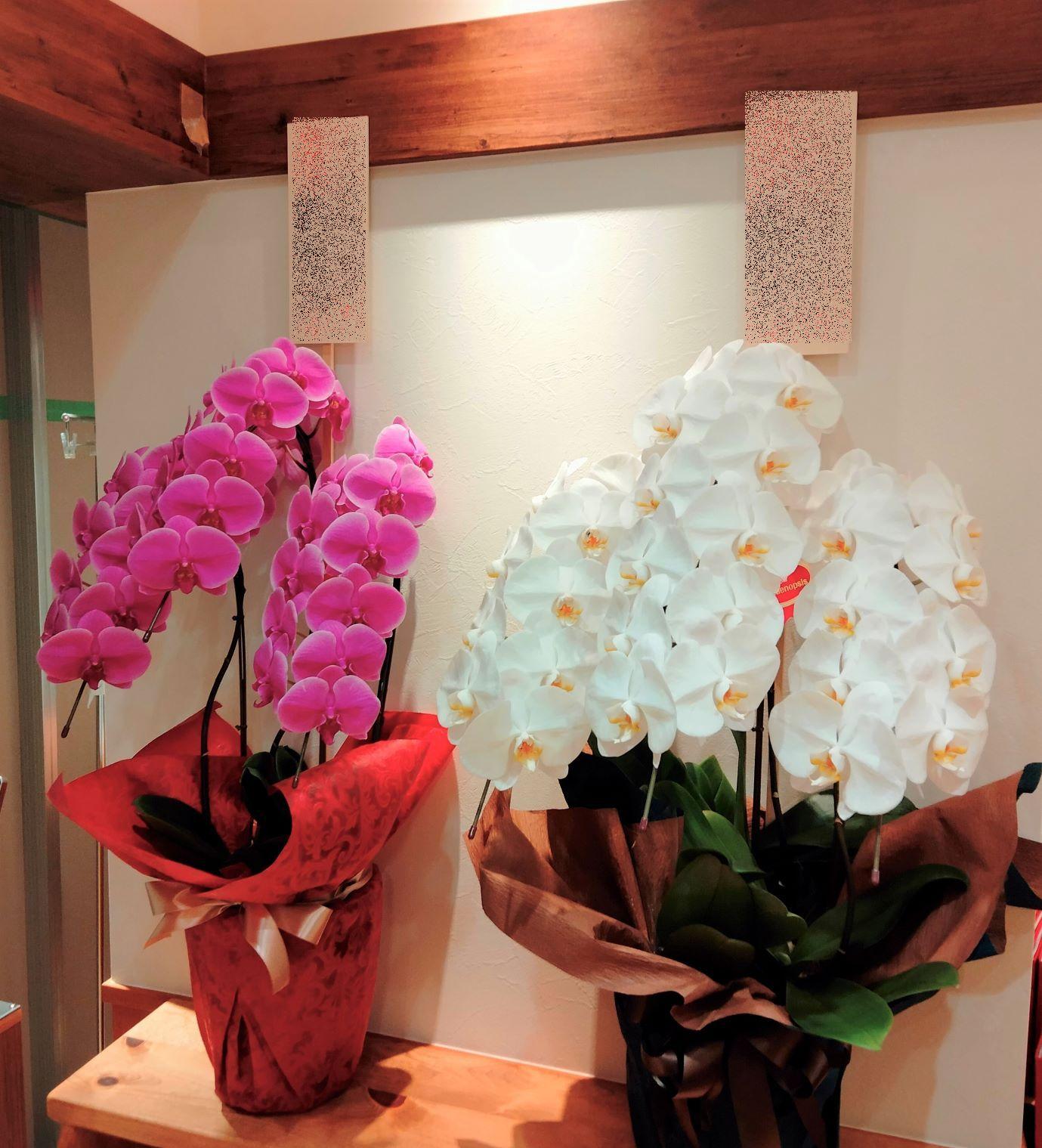 横浜市都筑区へ白とピンクの胡蝶蘭を配達しました。【横浜花屋の花束・スタンド花・胡蝶蘭・バルーン・アレンジメント配達事例953】
