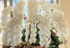 横浜市北幸へお祝いの胡蝶蘭を即日当日配達しました。【横浜花屋の花束・スタンド花・胡蝶蘭・バルーン・アレンジメント配達事例969】