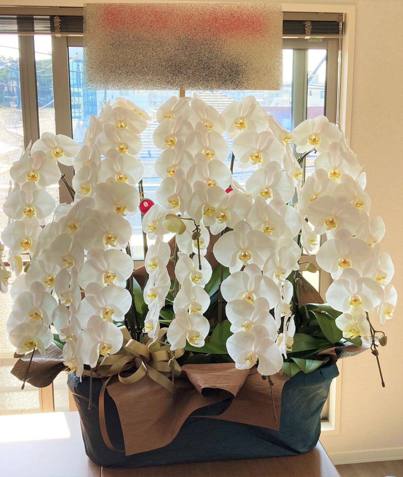 川崎市へ胡蝶蘭10本立を即日当日配達しました。【横浜花屋の花束・スタンド花・胡蝶蘭・バルーン・アレンジメント配達事例970】